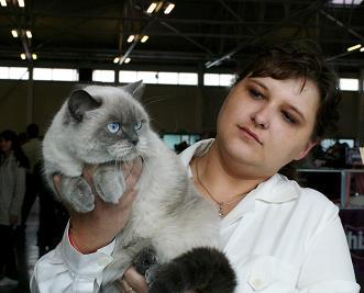 sa umiestnila na 12.mieste britská mačička colourpoint s modrými odznakmi EC  Avelin von Hunady SK majiteľky a chovateľky Zuzky Huňadyovej z Bratislavy. 1d0b7ac4c59